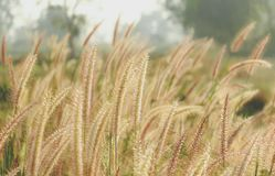 Grass flower in vintage style. Background Stock Photos