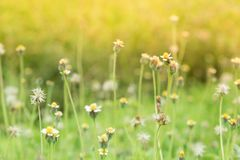 Grass flower beside the way. Royalty Free Stock Photo