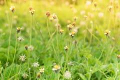 Grass flower beside the way. Stock Photo