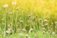 Grass flower beside the way. Royalty Free Stock Photos