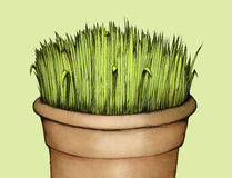 Grass in flowerpot. Illustration of some grass in a terracotta pot Royalty Free Stock Image