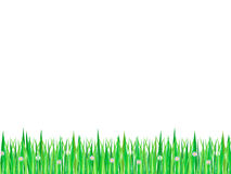 Grass with flowers. Stripe of grass with flowers on white background Stock Images