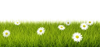 Grass with flowers Royalty Free Stock Photos