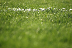 Grass and flowers. Blur and closeup of flowers royalty free stock photography