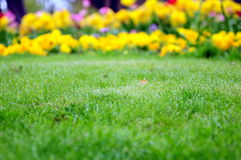 Grass and flowers. Green grass surrounded by flowers Stock Photography