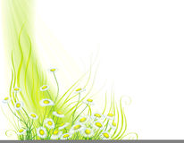 Grass and flowers vector illustration