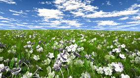 Grass and flowers. On a field Royalty Free Stock Images