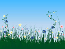 Grass flowers. Grass and flower on blue sky background Royalty Free Stock Image