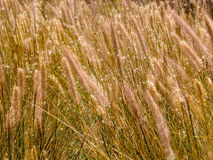 Grass flowers. Close up of grass flowers on a hill Stock Photography