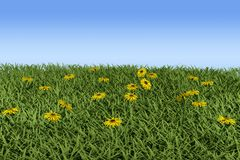 Grass and flowers. Grass and camomiles on the field. 3d model Royalty Free Stock Images