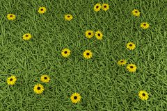 Grass and flowers. Grass and camomiles on the field Royalty Free Stock Photography