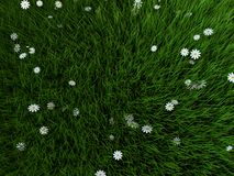 Grass and flowers. 3d rendered illustration of green grass and white flowers Stock Images