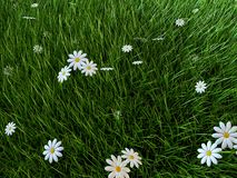 Grass and flowers. 3d rendered illustration of a green grass field with white flowers Royalty Free Stock Image