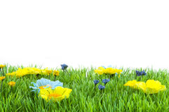 Grass with flowers Royalty Free Stock Photography