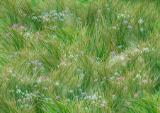 Grass and flowers Stock Image