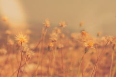 Grass flowers autumn season. Royalty Free Stock Photo
