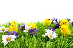 Grass with flowers and baby chicken Royalty Free Stock Photos