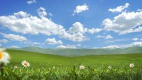 Grass and Flowers Blowing, Alpha Matte, Seamless Loop