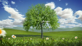 Grass and Flowers Blowing, Alpha Matte, Seamless Loop, 4K. Time-lapse of a tree growing on a hill. Clouds animated also stock video footage
