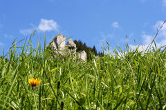 Grass, flowers and blue sky. Mountain landscape: grass, flowers and blue sky Stock Photo