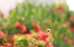 Grass flowers Royalty Free Stock Photos