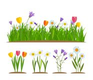 Grass and flowers border, greeting card decoration element White Background. Vector Illustration Royalty Free Stock Photos