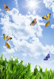 Grass with flowers and butterflies Royalty Free Stock Photos