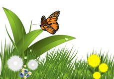Grass, flowers and butterfly, cdr vector Royalty Free Stock Images