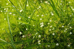 Grass and flowers carpet. Shot of grass and flowers carpet royalty free stock image