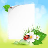 Grass, flowers, dew drops, ladybug. Note with leaves, drops of dew, ladybird and flowers. EPS10 Stock Images