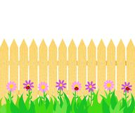 Grass and flowers before the fence. Ladybugs on flowers in front of a wooden fence Stock Image