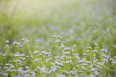 Grass flowers on field Stock Photography