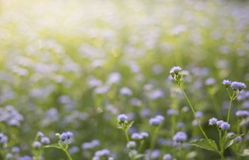 Grass flowers on field Stock Image