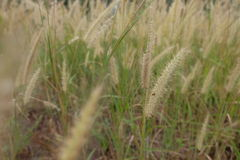 Grass flowers field close up. Vintage background. Royalty Free Stock Photography