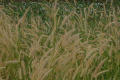 Grass flowers field. Nature background. Royalty Free Stock Photos
