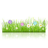 Grass with flowers. Green grass and multicolored flowers with reflection Stock Photo