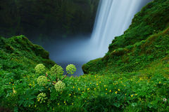 Grass and flowers growing near Skogafoss waterfall, South Icelan Stock Images