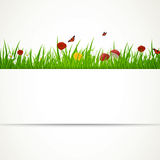 Grass and Flowers Stock Images