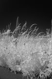 Grass and flowers in infrared light Stock Photos