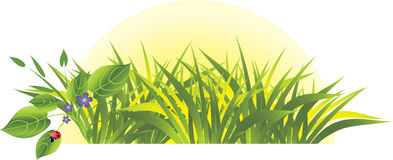 Grass and flowers with ladybird. Sunrise. Vector illustration Royalty Free Stock Image