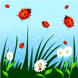 Grass, flowers and ladybugs Royalty Free Stock Image