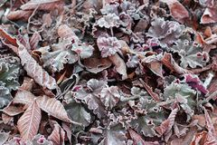 Grass, flowers and leaves oak, chestnut, walnut covered with morning frost close up Royalty Free Stock Image