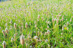 Grass flowers. A lot of grass flower on the ground Royalty Free Stock Image