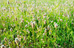 Grass flowers. A lot of grass flower on the ground Royalty Free Stock Photos