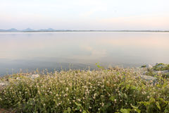 Grass flowers at Phra Satung water reservoir againt the sky Stock Photography