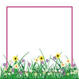 Grass and flowers plant isolated on white. Wild flowers plant and grass with pink frame isolated on white background. Nature spring or summer abstract flora Stock Photos
