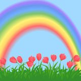 Grass,flowers and rainbow Stock Image