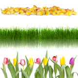 Grass and flowers in a row Stock Photography
