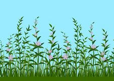 Grass and Flowers, Seamless Stock Photography