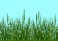 Grass and Flowers, Seamless Royalty Free Stock Photo